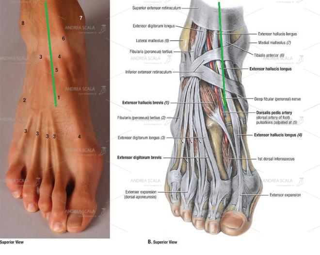 La linea verde indica l'accesso meno pericoloso e più naturale per arrivare alla caviglia.