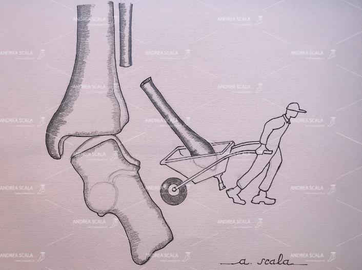 Illustrazione realizzata dal Dott. Scala