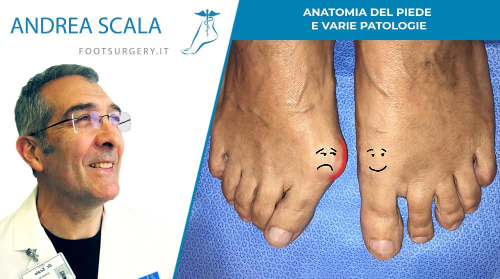 Anatomia del piede e varie patologie