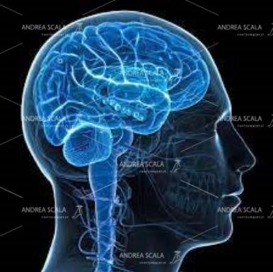 Il disegno mostra il cervello umano normale. Si vede che l'impulso elettrico procede dalla corteccia cerebrale, lungo il prolungamento del sistema nervoso, verso la parte distale del corpo.